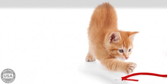 CAT NEET